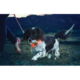 Nite Ize Nite Dawg LED Dog Collar Small Orange